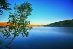 Einsames Suppengrün, das in einem Teich bei Sonnenaufgang wächst Lizenzfreies Stockfoto