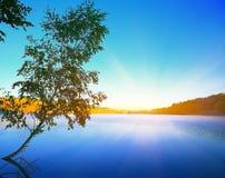 Einsames Suppengrün, das in einem Teich bei Sonnenaufgang wächst Blauer Himmel Lizenzfreie Stockfotografie