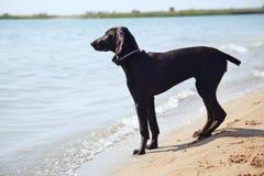 Einsamkeit des Hundes Lizenzfreie Stockbilder