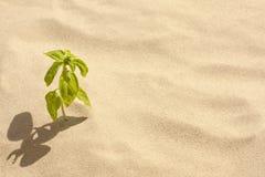 Einsamkeit- und Glaubenkonzept Lizenzfreie Stockfotos