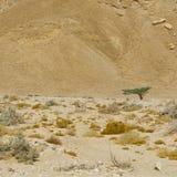 Einsamkeit und Leere der Wüste Lizenzfreie Stockfotos