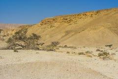 Einsamkeit und Leere der Wüste Stockfoto