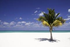 Einsamkeit - weißer Sand-Strand, Palme Stockfotos