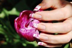 Einschläfern der Tulpe Stockfotografie