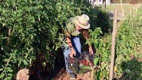 Einsetzen des Gemüses in Korb stock video