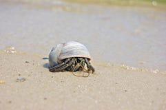 Einsiedler auf dem Strand Lizenzfreie Stockfotografie