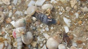 Einsiedlerkrebs auf Strand stock video footage