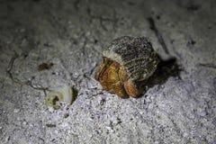 Einsiedlerkrebs nachts gehend auf einen Strand in Malediven Lizenzfreie Stockfotografie