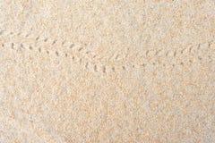 Einsiedlerkrebsabdrücke auf dem Sand stockfotografie