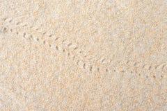 Einsiedlerkrebsabdrücke auf dem Sand lizenzfreie stockfotos