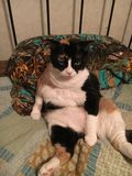 Einstellung bessert Katze aus Stockfotografie