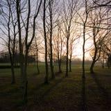 Einstellungssonne durch Winterbäume Stockfotos