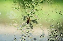 Eintagsfliege fest im Regen Stockfotografie