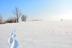 Einter风景 免版税库存照片