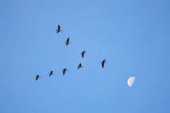 Eintragfaden für den Mond Stockbild