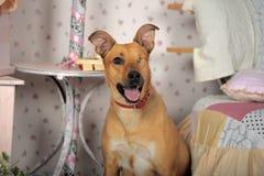 Einäugiger Hund Lizenzfreies Stockfoto