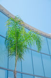 Einwegglasfenster auf der Fassade einer Palme stockfotografie