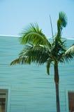 Einwegglasfenster auf der Fassade einer Palme Stockfotos