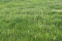 Einzeln aufgeführt nah herauf Ansicht über grünes Gras und Wiesen mit einigen kleinen Blumen eingelassen Sommer stockbild