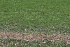 Einzeln aufgeführt nah herauf Ansicht über grünes Gras und Wiesen mit einigen kleinen Blumen eingelassen Sommer lizenzfreie stockbilder