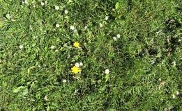Einzeln aufgeführt nah herauf Ansicht über grünes Gras und Wiesen mit einigen kleinen Blumen eingelassen Sommer lizenzfreie stockfotos