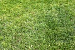 Einzeln aufgeführt nah herauf Ansicht über grünes Gras und Wiesen mit einigen kleinen Blumen eingelassen Sommer lizenzfreie stockfotografie