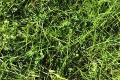 Einzeln aufgeführt nah herauf Ansicht über grünes Gras und Wiesen mit einigen kleinen Blumen eingelassen Sommer stockfoto