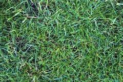Einzeln aufgeführt nah herauf Ansicht über grünes Gras und Wiesen mit einigen kleinen Blumen eingelassen Sommer lizenzfreies stockbild