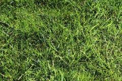 Einzeln aufgeführt nah herauf Ansicht über grünes Gras und Wiesen mit einigen kleinen Blumen eingelassen Sommer lizenzfreies stockfoto