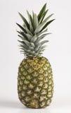 Einzelne Ananas Lizenzfreie Stockfotos