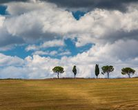 Einzelne Baumlinie Abhangkante in Toskana, Italien CR2 stockfoto