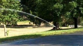 Einzelne Berieselungsanlage im Park, der grünes Baum-Gras abstellt stock video