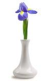 Einzelne Blenden-Lilie im weißen Vase auf weißem Hintergrund Stockfoto