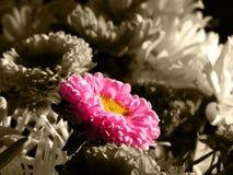 Einzelne bunte Blume im Blumenstrauß Stockfotografie