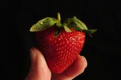 Einzelne Erdbeere angehalten zwischen zwei Fingern Stockfotografie