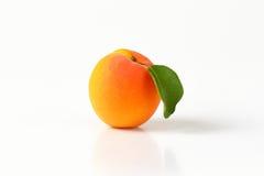 Einzelne frische Aprikose Stockfotos