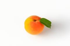 Einzelne frische Aprikose Stockfotografie