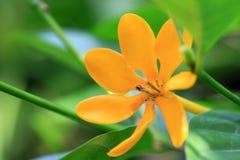 Einzelne gelbe Blume Stockbild