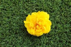 Einzelne gelbe Blume auf Gras Stockfoto