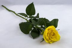 Einzelne gelbe Rose Stockbild