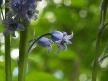 Einzelne Glockenblume in den Büschen Lizenzfreie Stockfotos