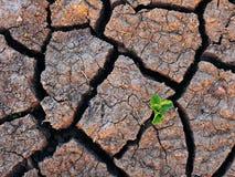 Einzelne Grünpflanze und trockener gebrochener Boden Stockbild