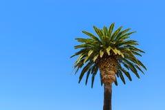 Einzelne große Palme auf Bucht Stockfotos