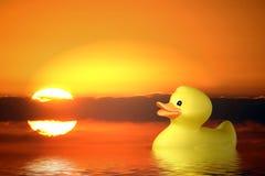 Einzelne Gummiente an der Sonnenaufgang-Schwimmen im Teich Lizenzfreies Stockfoto
