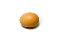 Einzelne Hühnerei Lizenzfreies Stockbild