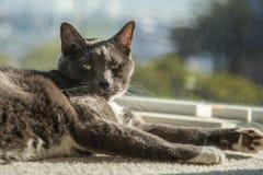 Einzelne Hauskatze, welche die Sonne genießt Stockbilder