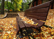 Einzelne Holzbank in Autumn Park With Colorful stockbild
