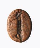 Einzelne Kaffeebohne lizenzfreies stockbild