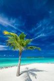 Einzelne KokosnussPalme auf einem werfenden Schatten des tropischen Strandes Stockfotos
