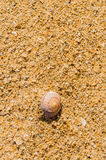 Einzelne Muschel im Sand Lizenzfreie Stockfotografie